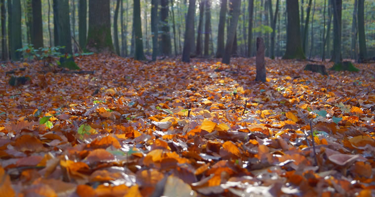 Autumn Ayurveda Cleanse and Replenish