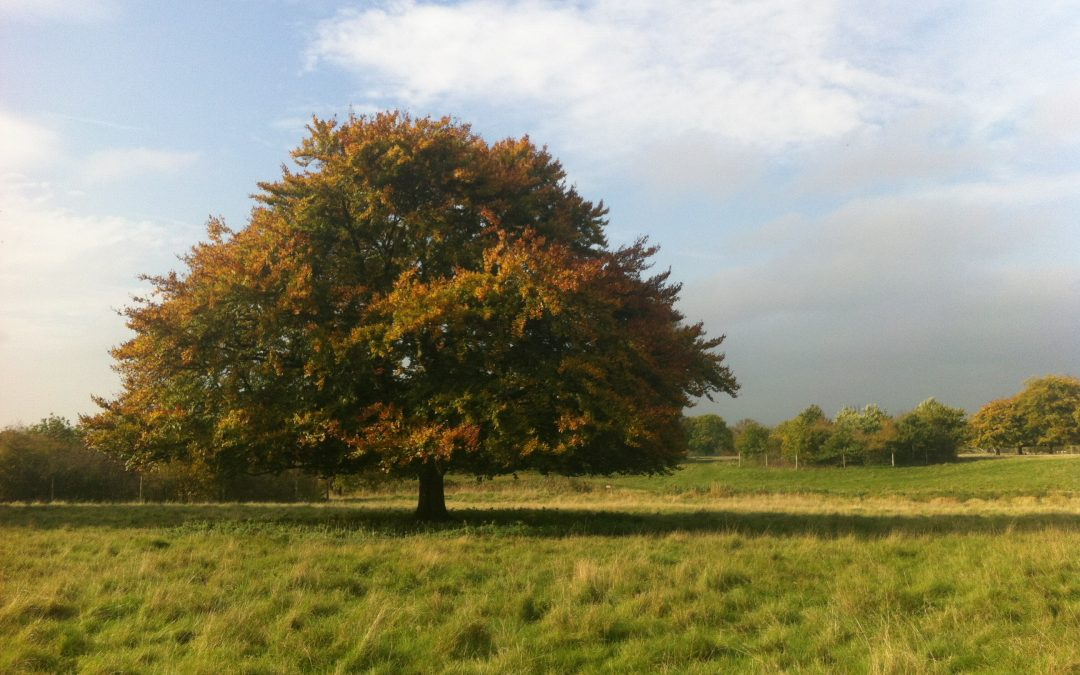 TRANSITION HEALTHILY FROM SUMMER TO AUTUMN WITH AYURVEDIC WISDOM