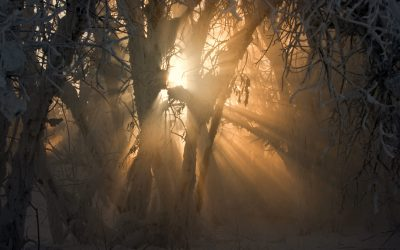 Welcoming In The Light:A Winter Solstice Practice & Celebration, Fri Dec 20th 7pm