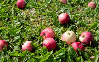 Ayurveda, Apples and How To Eat Them